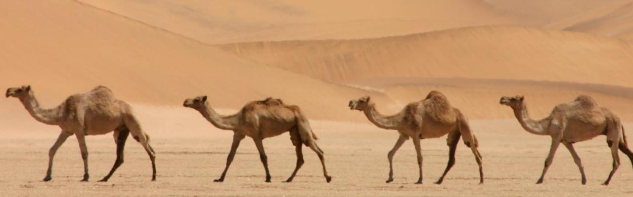 slider camellos